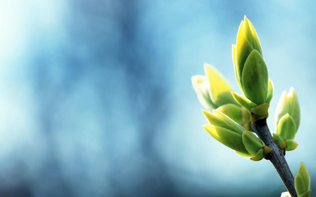 ws_Spring_Plants_2560x1600